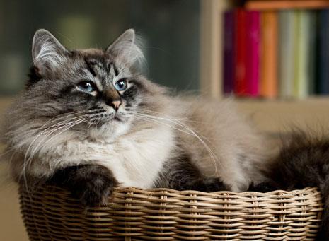 Gatos, la mascota más fiel