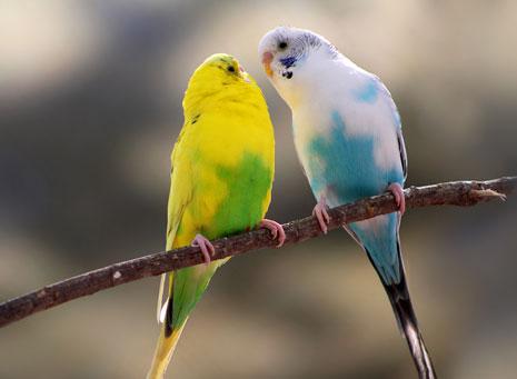 Pájaros, cantos de alegría