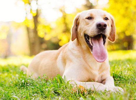 Perros, tu mejor amigo