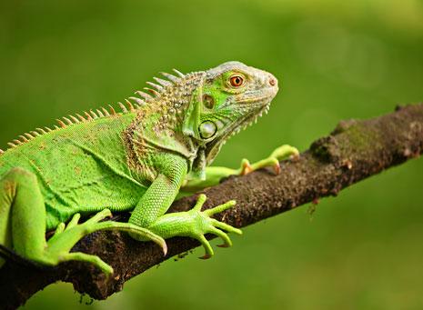 Reptiles, originales y exóticos