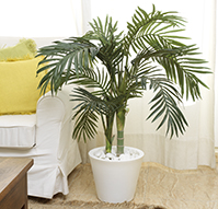 ARECA ARTIFICIAL