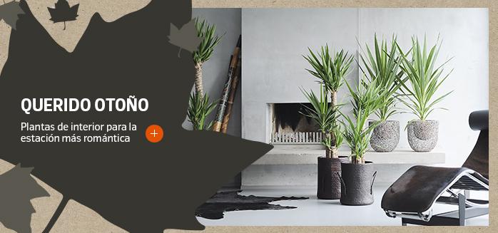 Querido otoño - Plantas de interior para la estación más romántica