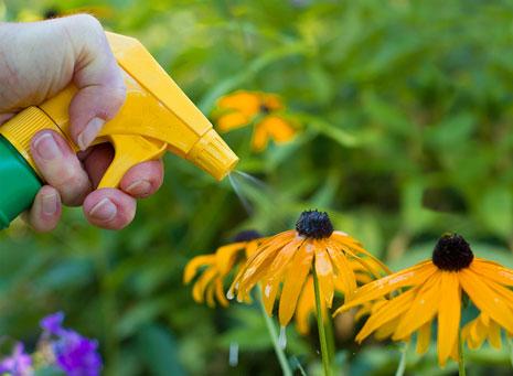 Fitosanitarios, cuida la salud de tus plantas