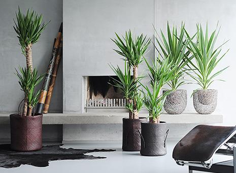 Plantas de interior, alegra tu hogar