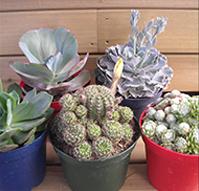 Jardiland for Plantas crasas interior