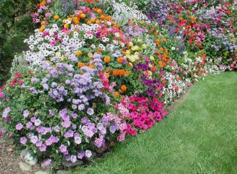 Plantas de temporada para macizos, macetas y balconeras. Toques de color