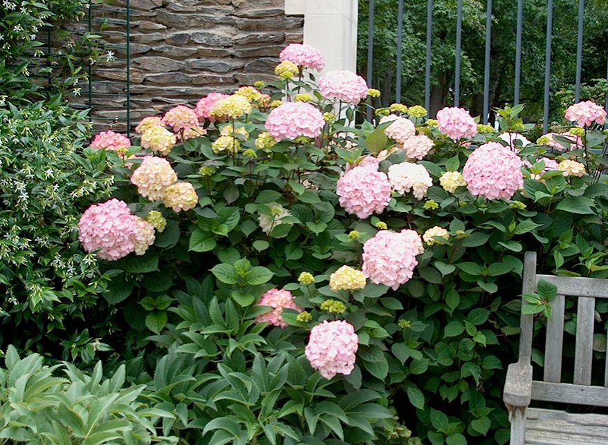 Plantas de exterior sombra bonito plantas exterior sombra for Plantas sombra exterior