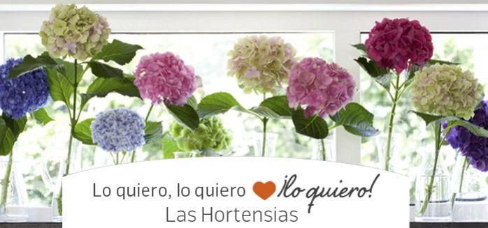 hortensias