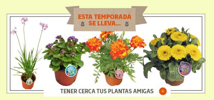 PLANTAS REPELENTES DE INSECTOS Y MOSQUITOS