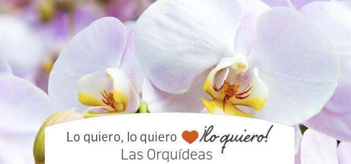 las orquideas en febrero