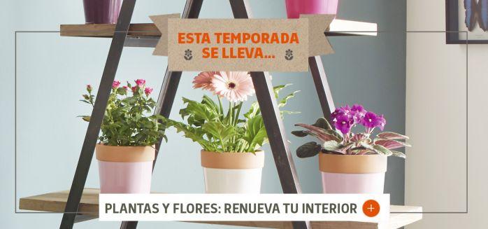 PLANTAS Y FLORES INTERIOR MARZO