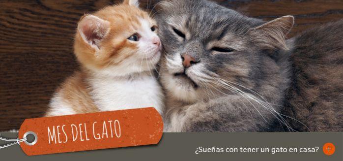 mes del gato jardiland