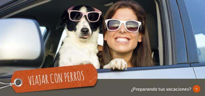 Prepara tus vacaciones con perros