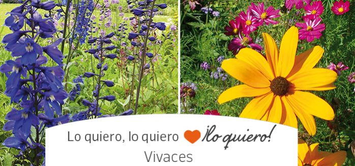 Flores y plantas vivaces o perennes
