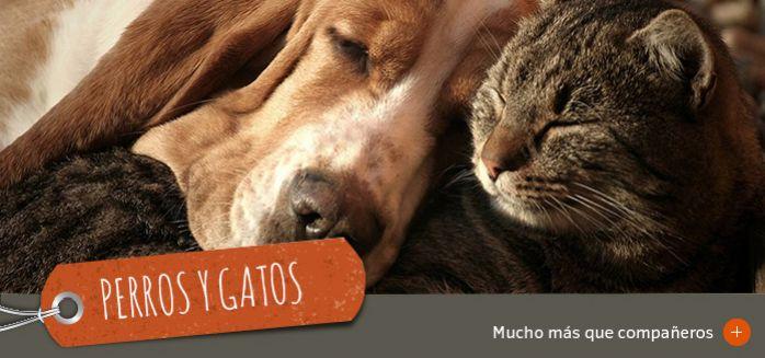 Perros y gatos grandes compañeros