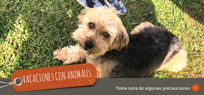 VACACIONES CON ANIMALES