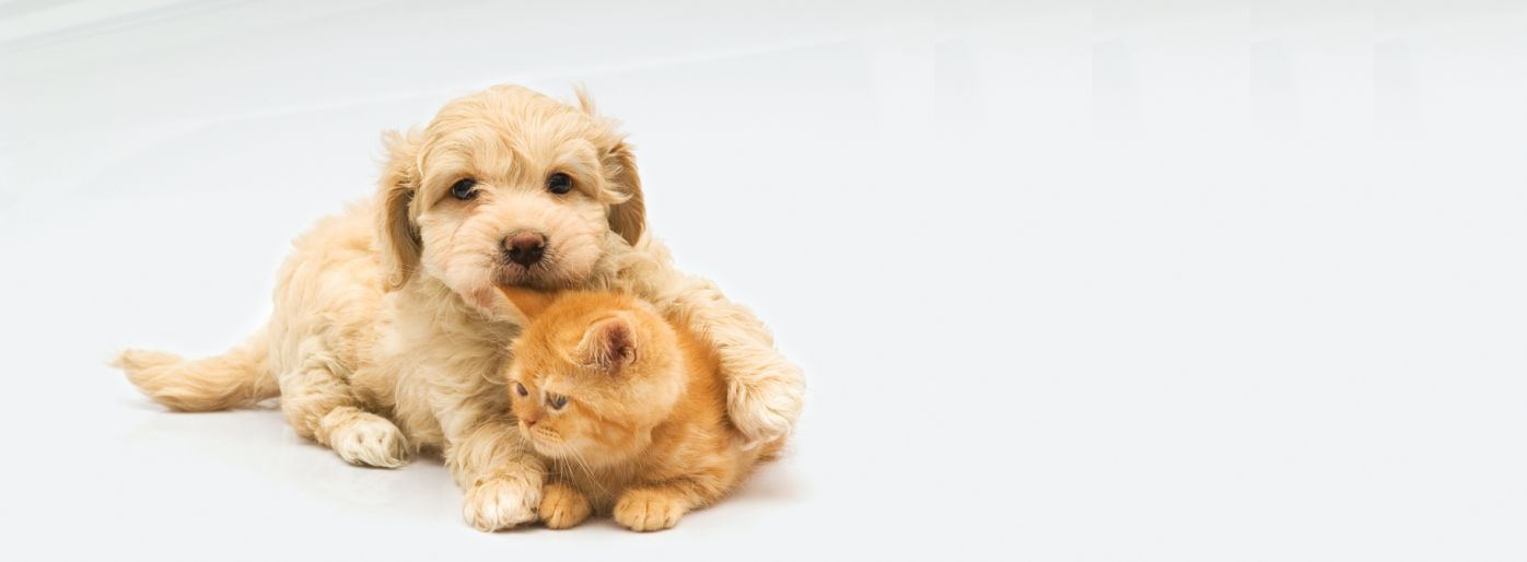 Info Covid19, Coronavirus, Horario, Animales, Mascotas