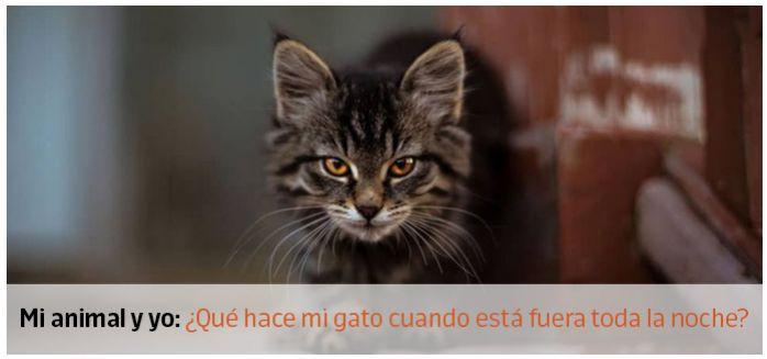 cuidados gatito