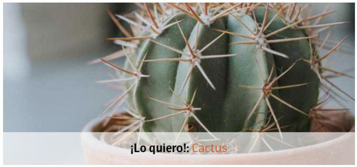 lo quiero cactus