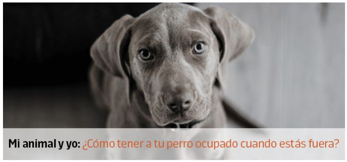 perro ocupado